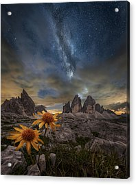 Even The Flowers Seem To Be Fascinated By The Stars Acrylic Print by Alberto Ghizzi Panizza