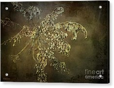 Even Weeds Are Beautiful Acrylic Print by Terry Rowe