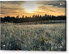 Evening Grasses In The Black Hills Acrylic Print