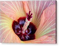 Evening Hau Blossom Acrylic Print by Mary Deal