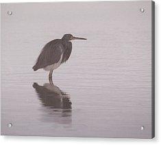 Evening Heron Acrylic Print