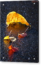 Evening Leaves On Wet Pavement Acrylic Print by Ronda Broatch