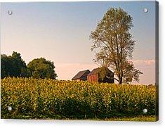 Evening On The Sunflower Farm Acrylic Print