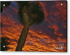 Evening Red Event Acrylic Print by Angela J Wright