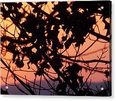 Evening Sky Acrylic Print by Angelika MacDonald