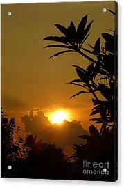 Evening Sun Acrylic Print by Marguerita Tan