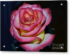 Event Rose Too Acrylic Print