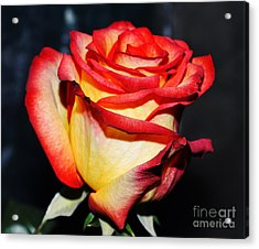 Event Rose 3 Acrylic Print