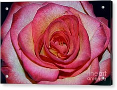 Event Rose Acrylic Print