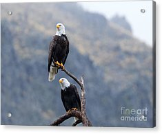 Ever Watchful Acrylic Print by Mike Dawson