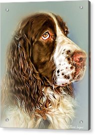 Ever Watchful English Springer Spaniel Acrylic Print by Wallaroo Images