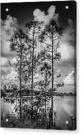 Everglades 0336bw Acrylic Print