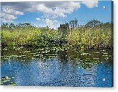 Everglades 0817 Acrylic Print