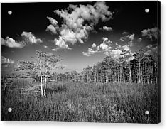 Everglades 9574bw Acrylic Print by Rudy Umans