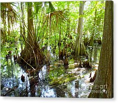 Everglades Acrylic Print by Carey Chen