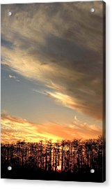 Everglades Clouds Acrylic Print by AR Annahita