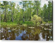 Everglades Lake Acrylic Print by Rudy Umans
