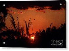 Everglades Sunset Acrylic Print by Steven Valkenberg