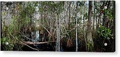 Everglades Swamp-1 Acrylic Print by Rudy Umans