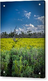 Everglades Tree Acrylic Print