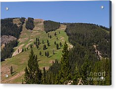 Acrylic Print featuring the photograph Evergreen Hillside by Charles Kozierok