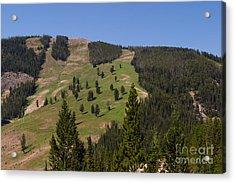 Evergreen Hillside Acrylic Print by Charles Kozierok