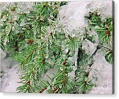 Evergreen Icicles I Acrylic Print