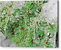 Evergreen Icicles II Acrylic Print by Chuck Flewelling