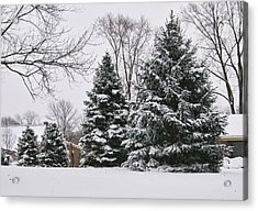 Evergreens In The Snow Acrylic Print