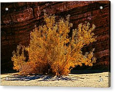 Acrylic Print featuring the photograph Every Common Bush by Jeremy McKay
