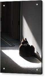 Everybody Needs A Sunny Spot Acrylic Print