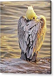 Evil Eye Pelican Acrylic Print