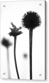 Acrylic Print featuring the photograph Evolution by Arkady Kunysz