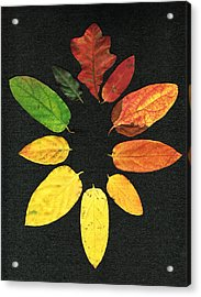 Evolution Of Autumn Bk Acrylic Print by Pete Trenholm