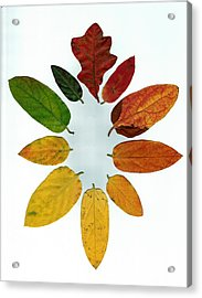 Evolution Of Autumn Wh Acrylic Print by Pete Trenholm