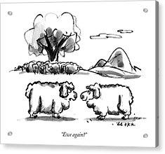 Ewe Again? Acrylic Print by Lee Lorenz