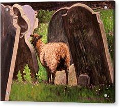 Ewe Spooked? Acrylic Print by Janet Greer Sammons