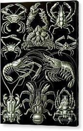 Examples Of Decapoda Kunstformen Der Natur Acrylic Print
