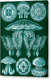 Examples Of Discomedusae Acrylic Print by Ernst Haeckel