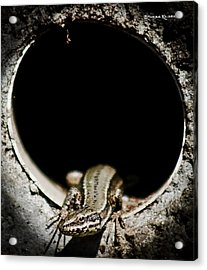 Acrylic Print featuring the photograph Exit Of Lizard Devil by Stwayne Keubrick
