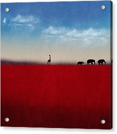 Exodus Acrylic Print by Andy Walsh