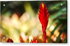 Exotic Plant Acrylic Print by Cristin Sirbu