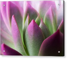 Exotic - Pink Purple Green Flower Landscape Photograph Acrylic Print by Artecco Fine Art Photography
