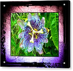 Exotic Strange Flower Acrylic Print by Absinthe Art By Michelle LeAnn Scott