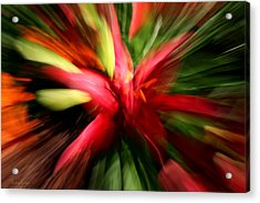 Exploding Lily Acrylic Print
