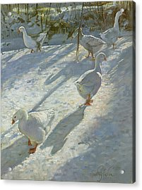 Exploring The Slope Acrylic Print by Timothy Easton