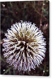 Explosion Acrylic Print by Lucy D