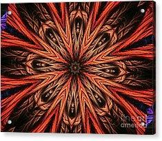 Explosion Of A Carrot  Acrylic Print by Fania Simon