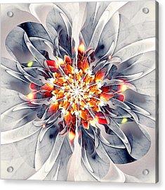 Exquisite Acrylic Print by Anastasiya Malakhova