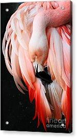 Exquisite Pink Flamingo #1 Acrylic Print